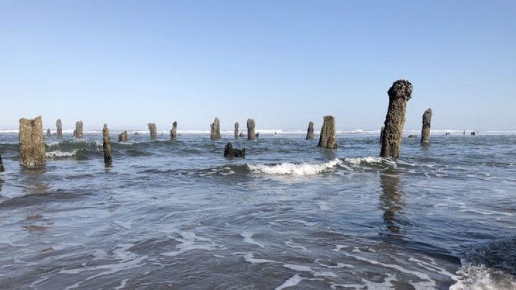 Desde el sur del río Columbia -que comparten Estados Unidos y Canadá- hasta la frontera con California, la costa oregonense es una mezcla de extensas playas de arena, superficies rocosas e imponente vegetación (EFE/Tania Cidoncha)