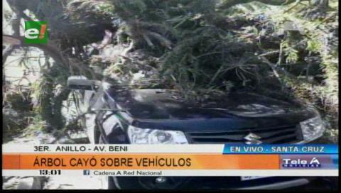 Enorme árbol cae sobre tres vehículos en la avenida Beni
