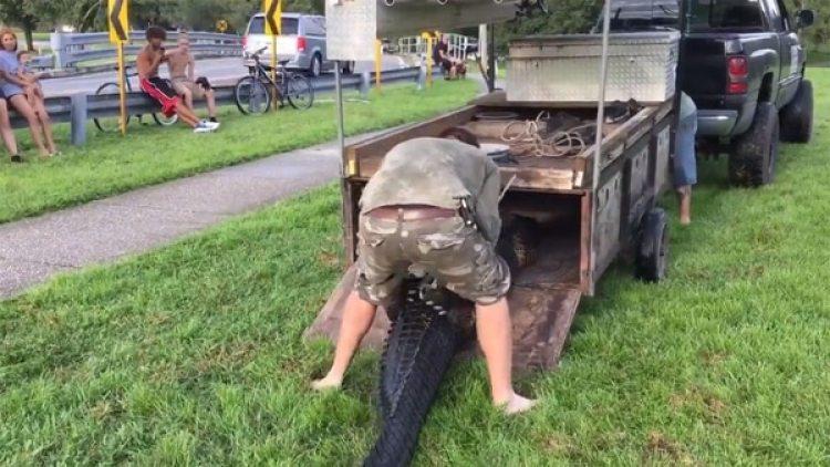 El caimán será sacrificado, así como otro ejemplar de menor tamaño que fue localizado en el estanque del parque