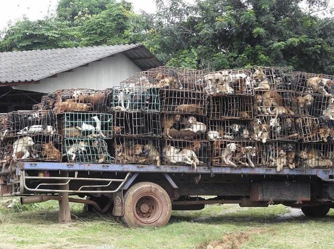 El contrabando de perros entre Tailandia y Vietnam es habitual (EFE)