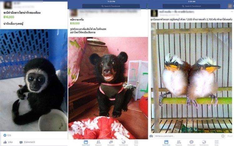 Más de 200.000 usuarios de Facebookintegrangrupos de tráfico animal en Tailandia. (Traffic)
