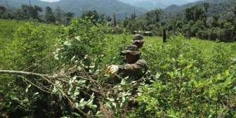 Los narcocultivos baten un nuevo récord en Colombia