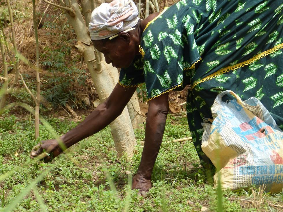 Una campesina del Sahel, a las orillas del río Níger, en Niamey.