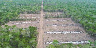 Santa Cruz. Una herida de 55 ha desangra el valle de Tucavaca en la reserva forestal de Roboré