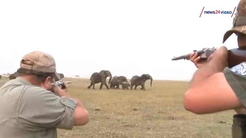 #Video Manada persigue a cazadores tras dispararle a elefante
