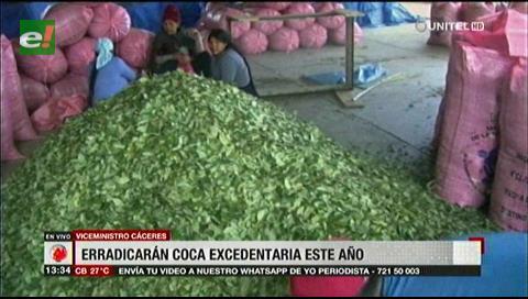 Viceministro de Sustancias Controladas asegura que erradicarán la coca excedentaria