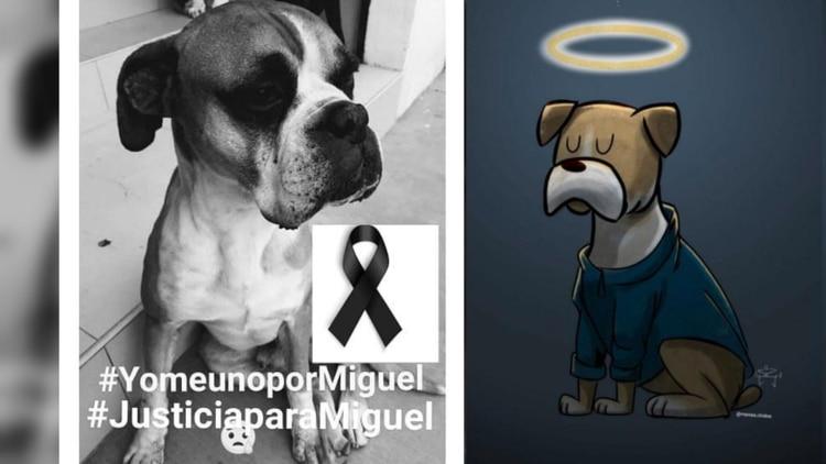 Miguel murió por una explosión de pirotecnia que un hombre detonó (Foto: Twitter CCilthya, eva_ronquillo)