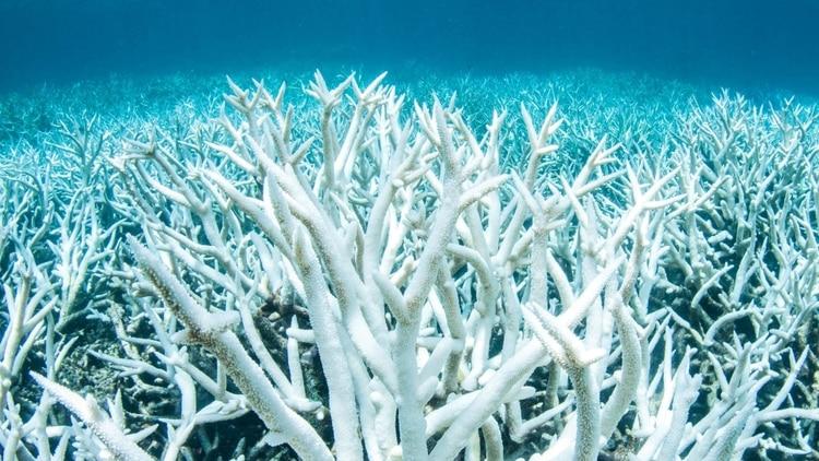 La barrera coralina australiana es uno de los ecosistemas afectados por el cambio climático.