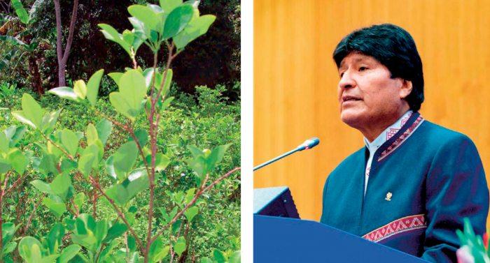Presidente Evo Morales en la sesión de la Comisión de Estupefacientes de la Organización de Naciones Unidas (ONU), realizado en Viena, Austria, habló del modelo antidroga y de los cultivos de coca.