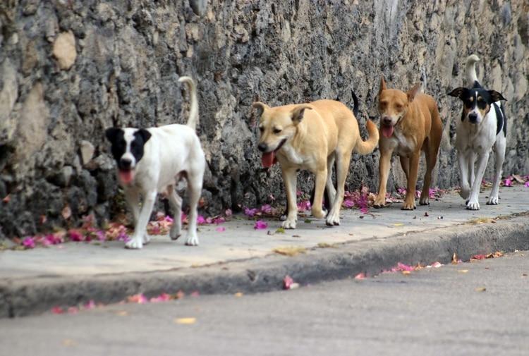 Se les pide a los dueños de los animales que interpongan una denuncia por el delito ante la FGJ (Foto: MARGARITO PÉREZ RETANA /CUARTOSCURO)