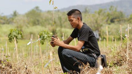 Un estudiante filipino plantando árboles en la selva tropical al sur de Manila, el 23 de febrero de 2011.