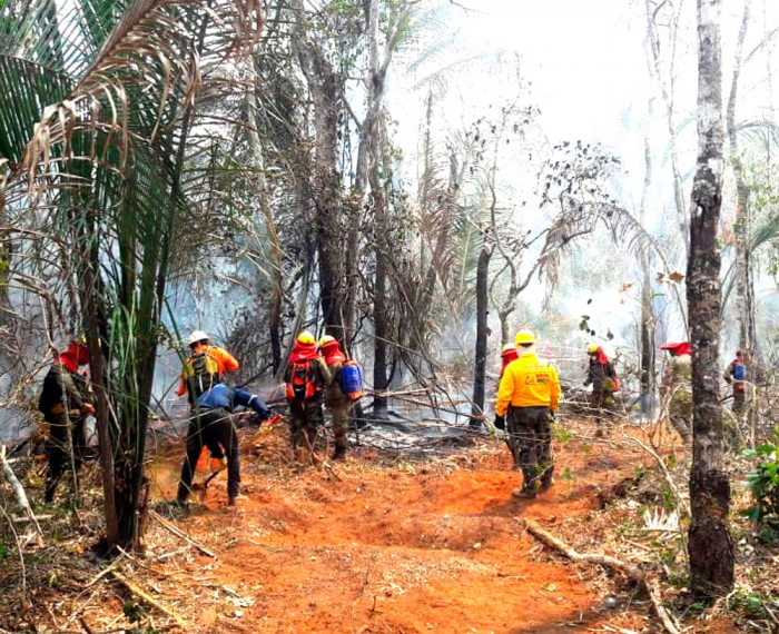 Bomberos en plena acción para apagar el fuego.