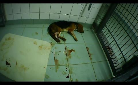 Un vídeo muestra el terrible maltrato a monos, perros y gatos en un laboratorio alemán