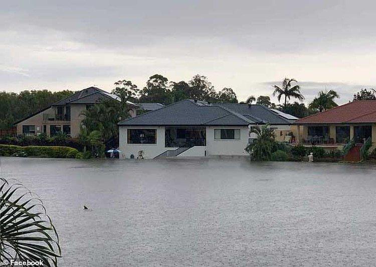 Imagen compartida por un usuario sobre un posible tiburón en Australia tras las inundaciones (FACEBOOK)