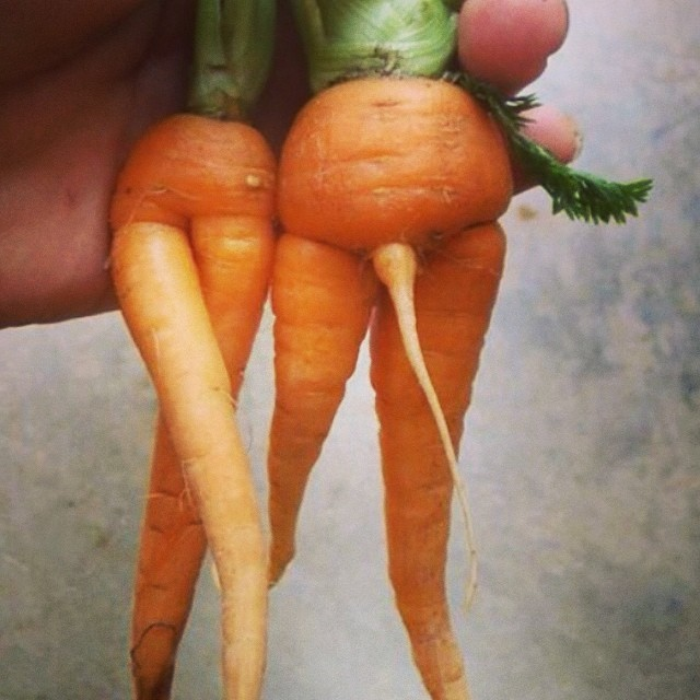 male and female carrots