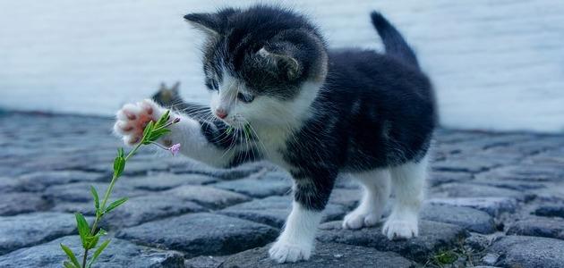 إسم صوت القطة يسمى