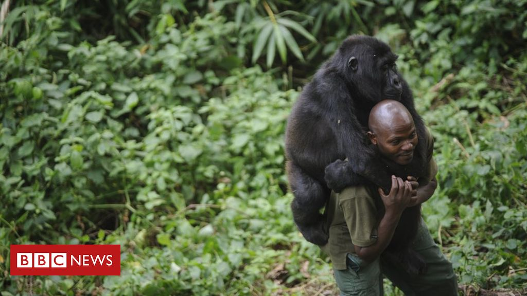 The deadly job of protecting DR Congo's Virunga National Park