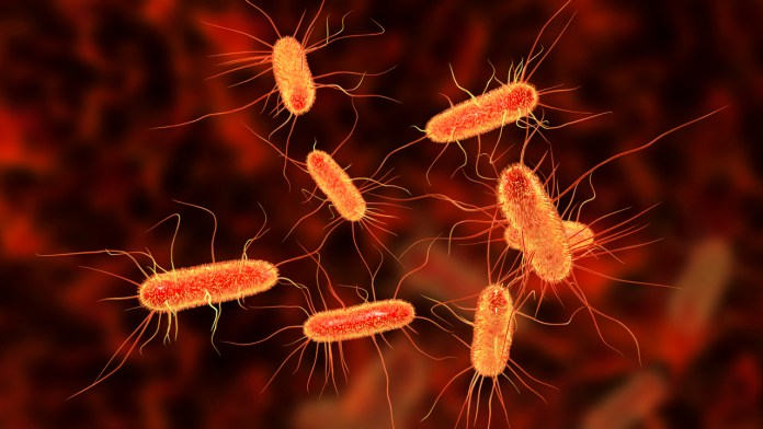 E.coli outbreak in Washington state may be linked to fresh produce, officials say