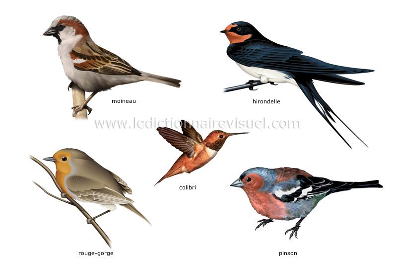 exemples d'oiseaux image