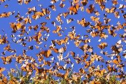 L'énigme des grandes migrations animales
