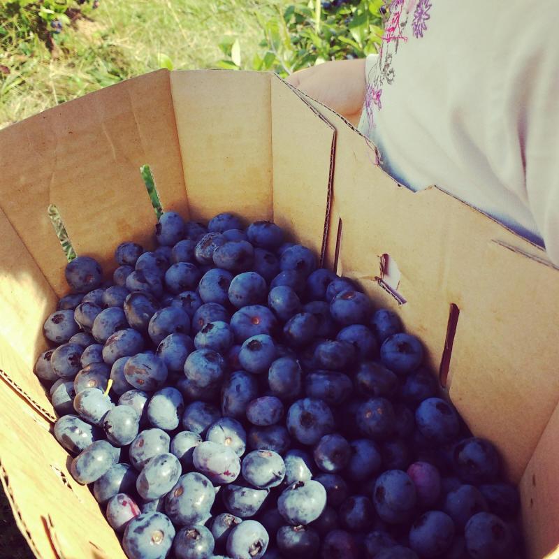 Confiture de bleuets de St-Isidore (en Gaspésie!)