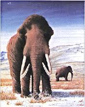 Les Mammouth  - L'étrange fin