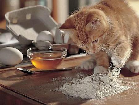 """Résultat de recherche d'images pour """"chat qui mange une galette des rois"""""""