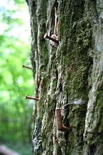 L'arbre à clous