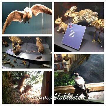Visite du musée de l'Histoire Naturelle de Dijon
