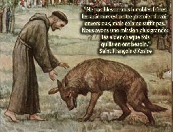 """Résultat de recherche d'images pour """"loup saint françois d'assise"""""""