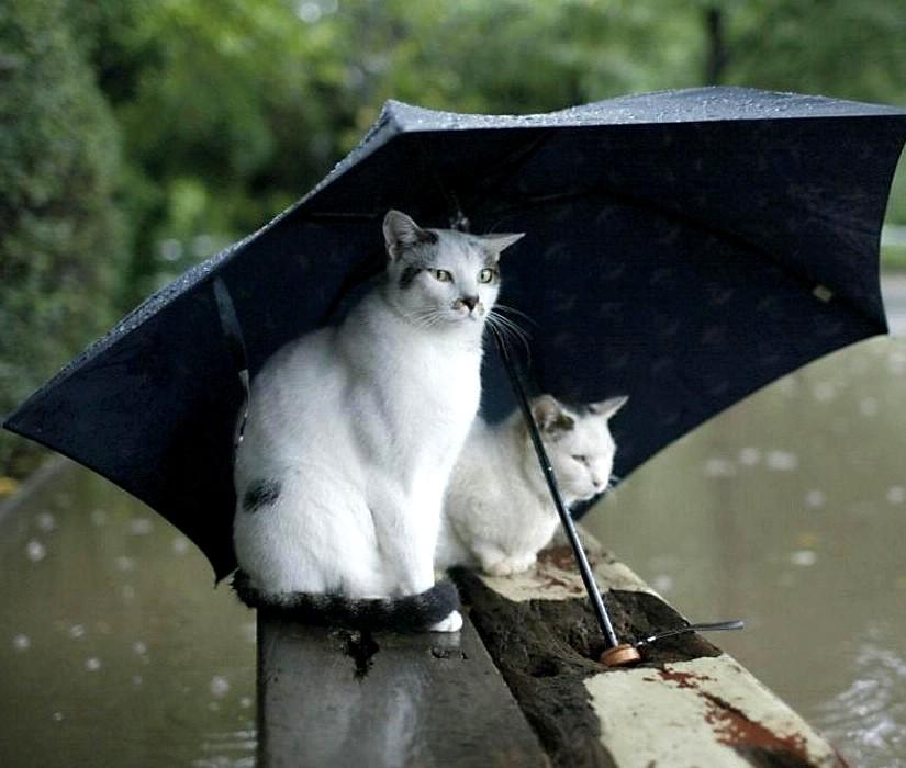 """Résultat de recherche d'images pour """"parapluies"""""""