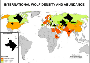 Exposer sur les loup par nami