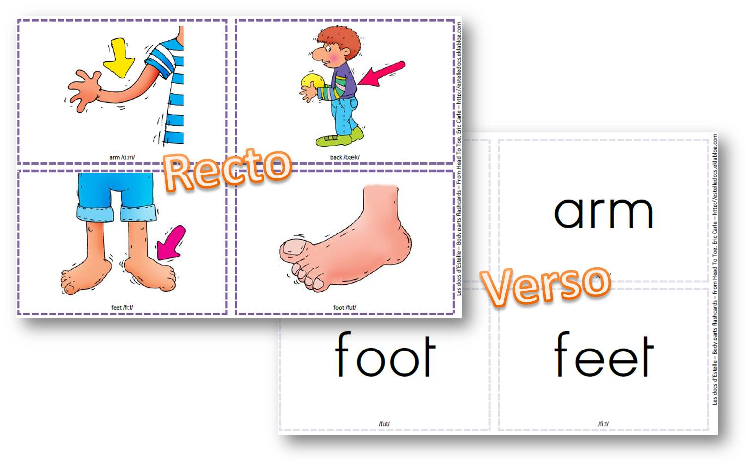 Flashcards Bodyparts Pour L Album From Head To Toe De Eric