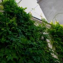 Mur végétalisé- Eklektike - Christophe Noel