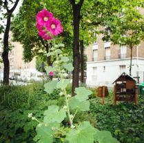 Vegetalisons Paris Fleurs - Eklektike