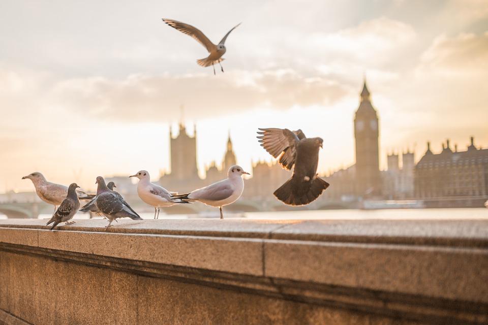 Sposoby na odstraszenie niechcianych ptaków z balkonu