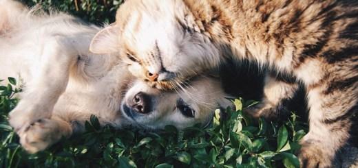 Obroże dla psów i kotów