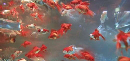 Odmulacze do akwarium, a pokarm dla rybek