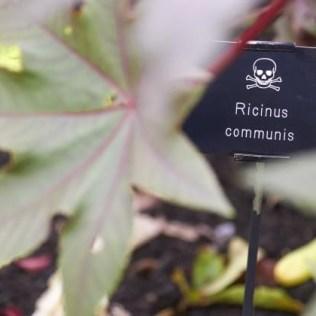 ricinus-poison