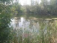 Bregov izvor3