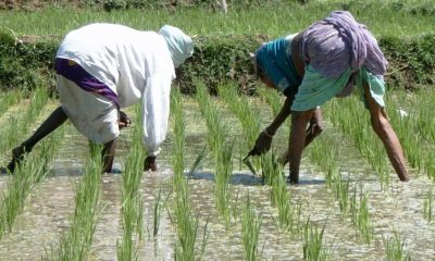 USAID Begin Training For Rice Farmers In Delta