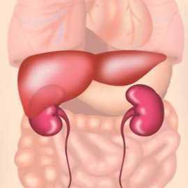 Сироп за Черния дроб