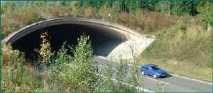 Holländsk viltbro