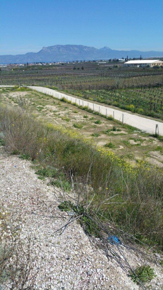 Καταγγελία αναγνώστη για φύτευση ελιών σε απαλλοτριωμενο χωρο