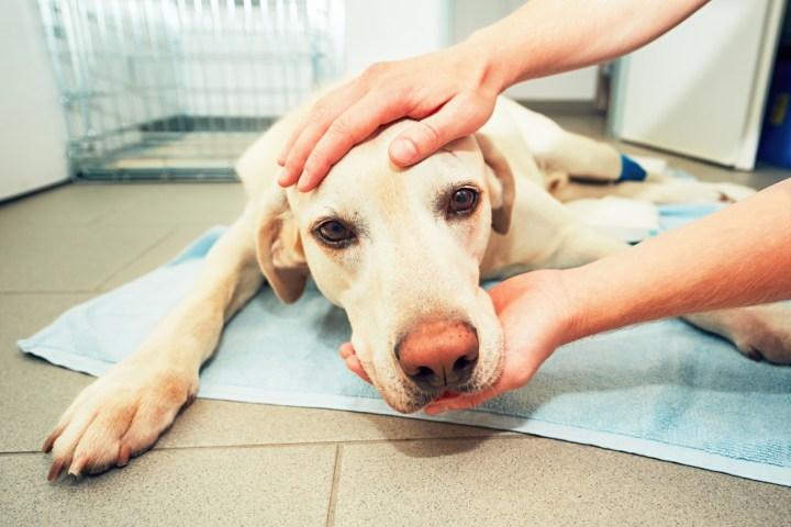 Τι θέλει ένας σκύλος λίγο πριν πεθάνει -Ενας κτηνίατρος αποκαλύπτει την τελευταία επιθυμία των κατοικιδίων