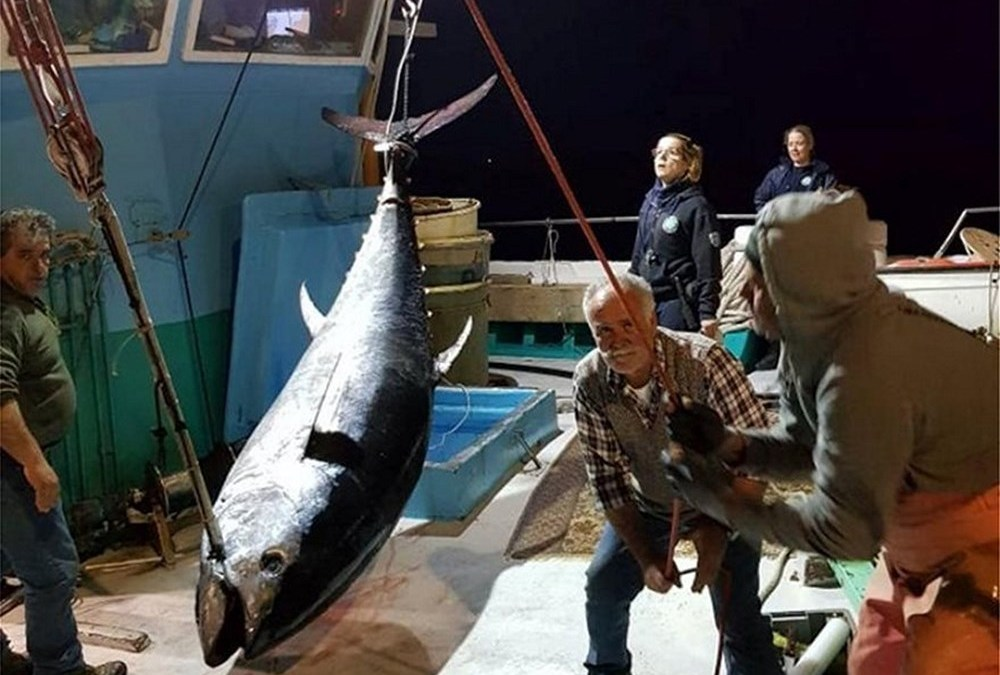 Ψάρεψαν τόνο «γίγαντα» στο Αιγαίο