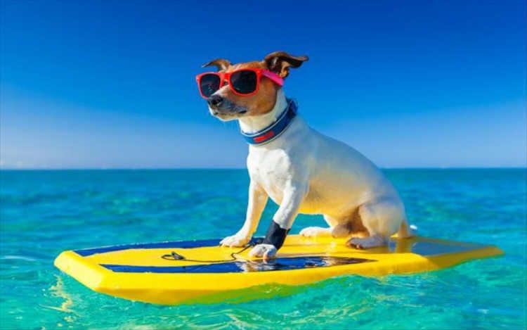 Μπορώ να πάρω το σκύλο μαζί μου στην παραλία;