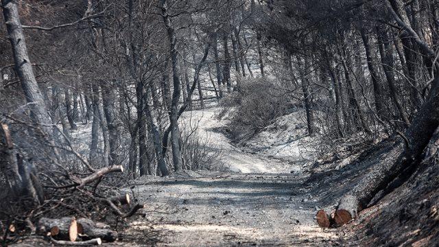 Φωτιά στην Εύβοια: Τα τρία σενάρια που «δείχνουν» εμπρησμό – Οριοθετημένη η πυρκαγιά
