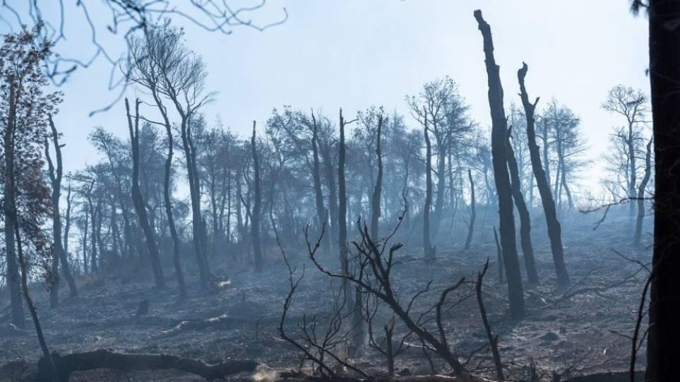 Στοιχεία – σοκ: Οι φετινές πυρκαγιές έκαψαν έκταση πρασίνου… ίση με το νησί της Σαλαμίνας!