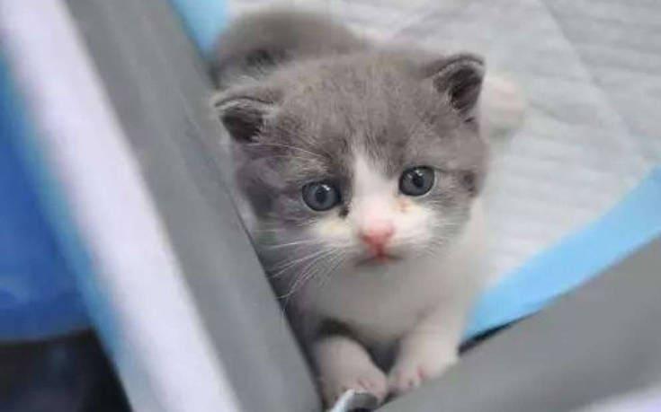 Αυτή η γάτα κοστίζει 30000 ευρώ.Δείτε γιατί..